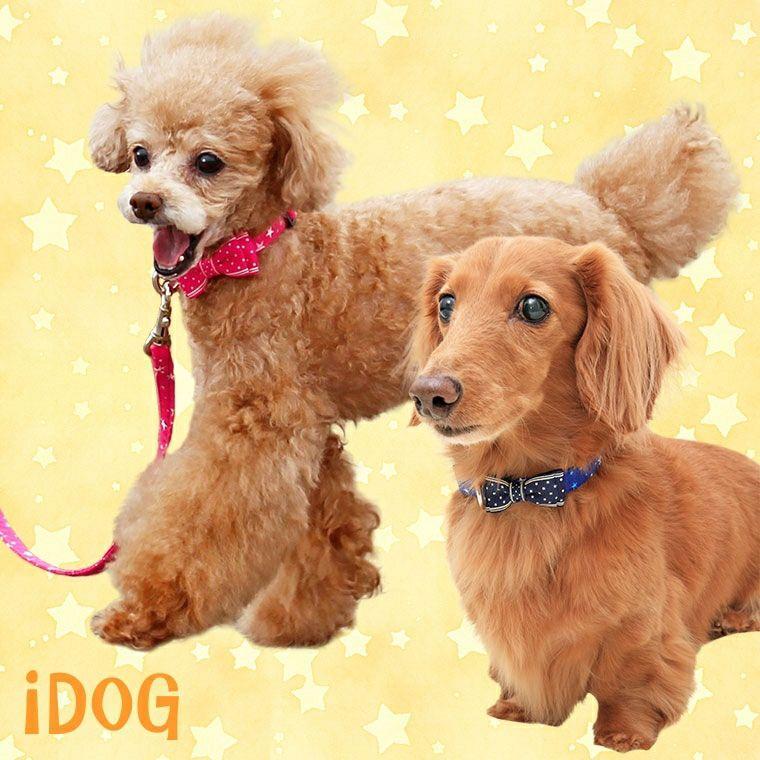 【 犬 首輪 リード 】iDog アイドッグ リード・カラーセット ランダムスター×スターリボン メール便OK
